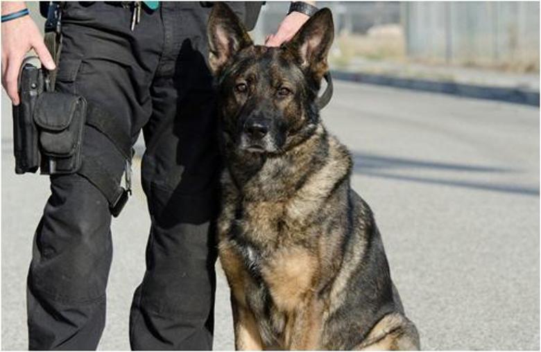 Hundeführer-Einheiten in Polizeikorps