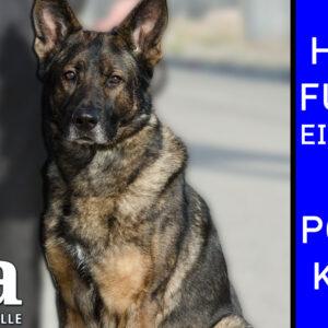 Hundeführer-Einheiten in den Polizeikorps